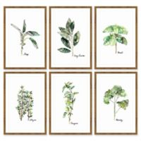 Marmont Hill Herb Family Hexaptych 12-Inch x 18-Inch Framed Wall Art (Set of 6)