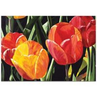 Metal Art Studio Tulip Field 32-Inch x 22-Inch Wall Art in Plexiglass