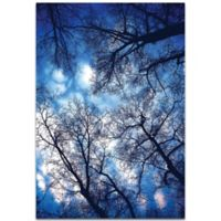 Metal Art Studio Sky Vains 22-Inch x 32-Inch Plexiglass Wall Art