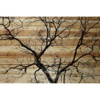 Parvez Taj Branching Out III 16-Inch x 24-Inch Pinewood Wall Art