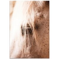 Metal Art Studio Horse Eye 22-Inch x 32-Inch Plexiglass Wall Art