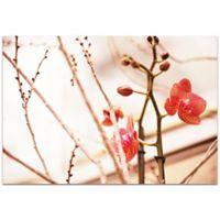 Metal Art Studio First Bloom Photo 32-Inch x 22-inch Plexiglas Wall Art