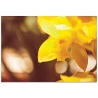 Metal Art Studio Golden Bloom 32-Inch x 22-Inch Plexiglass Wall Art in Yellow