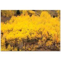 Metal Art Studio Aspen Autumn 32-Inch x 22-Inch Plexiglass Wall Art
