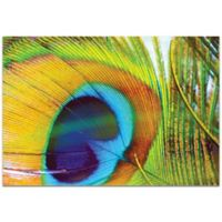 Metal Art Studio Peacock Colors 32-Inch x 22-Inch Plexiglas Wall Art