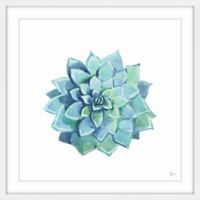 Marmont Hill Echeveria Blue Star 48-Inch Square Framed Wall Art