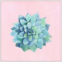 Marmont Hill Echeveria Imbricata III 20-Inch Square Framed Wall Art