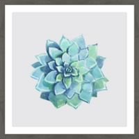 Marmont Hill Echeveria Imbricata 40-Inch Square Framed Wall Art