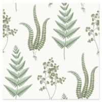 Brewster Home Fashions Ebele Herbs Wallpaper in White