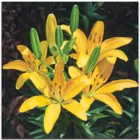 Metal Art Studio Yellow Lilies 22-Inch sq. Metal Traditional Art