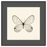 Amanti Art Butterfly I Crop 16-Inch Square Framed Wall Art