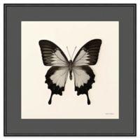 Amanti Art Butterfly III Crop 16-Inch Square Framed Wall Art