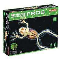 4D Master® 4D Vision Full Skeleton Frog Model