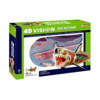4D Master® 4D Vision Great White Shark Anatomy Model