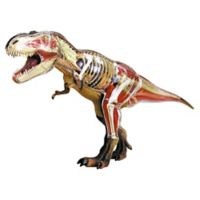 4D Master® 4D Vision T-Rex Anatomy Model
