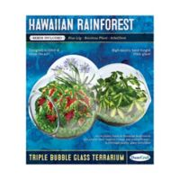 DuneCraft Hawaiian Rainforest Triple Bubble Glass Terrarium