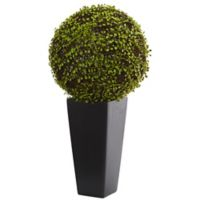 Nearly Natural 2.5-Foot Artifical Mohlenbechia Ball Plant in Black Tapered Vase
