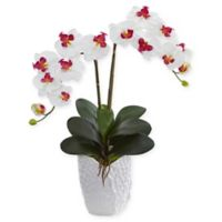 Nearly Natural 24-Inch Artificial Orchid Arrangement in White