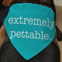 Pet Expressions Dog Bandana