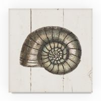 Trademark Fine Art Shell Sketches I 14-Inch Square Canvas Wall Art