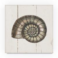 Trademark Fine Art Shell Sketches I 24-Inch Square Canvas Wall Art