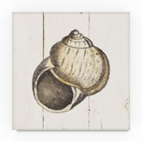 Trademark Fine Art Shell Sketches II 24-Inch Square Canvas Wall Art