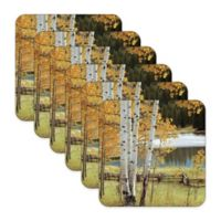 Pimpernel Birch Beauty Coasters (Set of 6)
