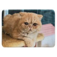 Whimsical Whiskers 1'6 x 2'6 Exotic Shorthair Rug