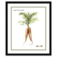 Amanti Art Root Vegetable I Carrot 21-Inch x 25-Inch Framed Wall Art