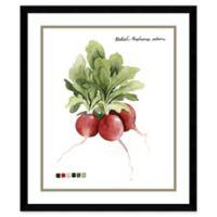 Amanti Art Root Vegetable I Radish 21-Inch x 25-Inch Framed Wall Art