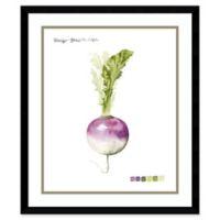 Amanti Art Root Vegetable I Turnip 21-Inch x 25-Inch Framed Wall Art