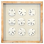 Sand Dollar 14-Inch Square Shadowbox Wall Art