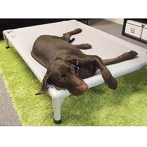 coolaroo aluminum frame elevated pet bed