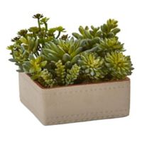 Nearly Natural 7-Inch Mixed Succulents in Stucco Textured Planter