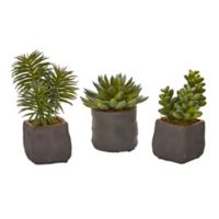 Nearly Natural 5-Inch Mixed Succulents in Stucco Textured Planters (Set of 3)