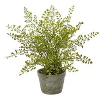 Nearly Natural 13-Inch Maidenhair Fern in Mossed Grey Pot
