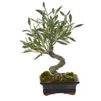 Nearly Natural 13-Inch Olive Bonsai Tree in Black Rectangular Planter