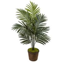Nearly Natural 4-Foot Kentia Palm Tree in Coiled Rope Basket