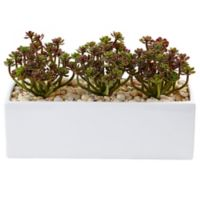 Nearly Natural 7.75-Inch Sedum Succulents in White Rectangular Planter