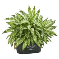Nearly Natural 20-Inch Aglonema Artificial Plant in Wood Planter