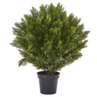 Nearly Natural 3-Foot Cedar Bush in Black Nursery Pot