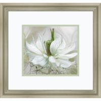 Amanti Art Nigella 18-Inch x 17-Inch Framed Wall Art