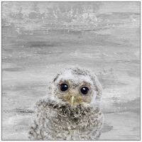 Marmont Hill Snow Owl 12-Inch x 12-Inch Canvas Wall Art