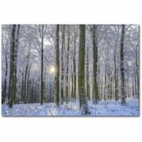 Courtside Market 24-Inch x 36-Inch Frosty Forest Canvas Wall Art