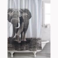 Zarma Shower Curtain in White/Black