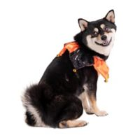 Hallowen Dog Jester Bell Collar