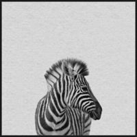 Marmont Hill Zebra 18-Inch Square Framed Wall Art