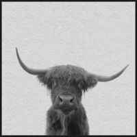 Marmont Hill Black & White Buffalo 12-Inch Square Framed Canvas Wall Art