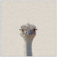 Marmont Hill Grumpy Ostrich II 32-Inch Square Framed Wall Art