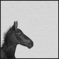 Marmont Hill Black Horse IV 12-Inch Square Framed Wall Art
